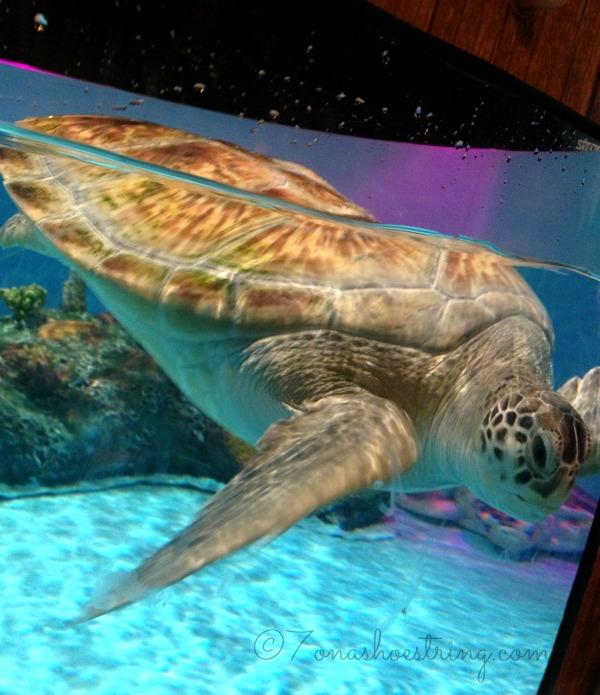 SEA LIFE Aquarium Grapevine Features Turtle Rescue Center