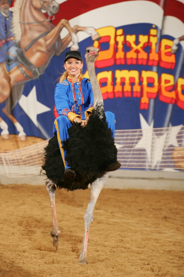Family Friendly Entertainment at Branson's Dixie Stampede