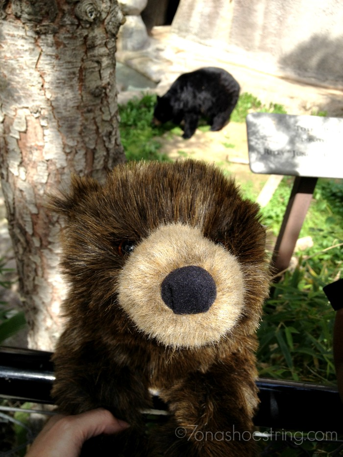 Amber meets Bear