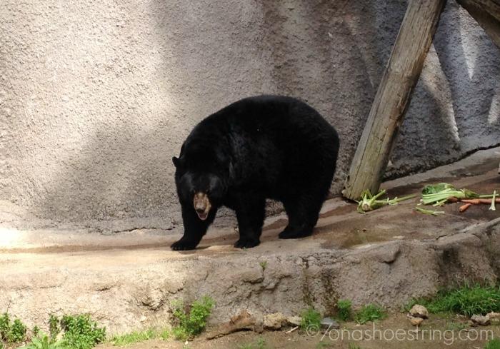LA Zoo bear