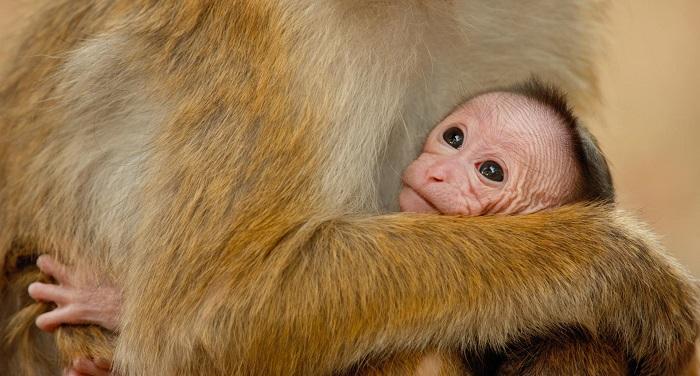 Monkey Kingdom Maya and baby