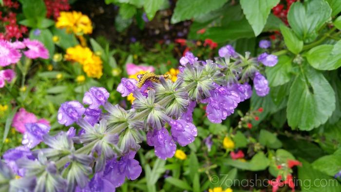 caterpillar at Epcot Flower & Garden festival