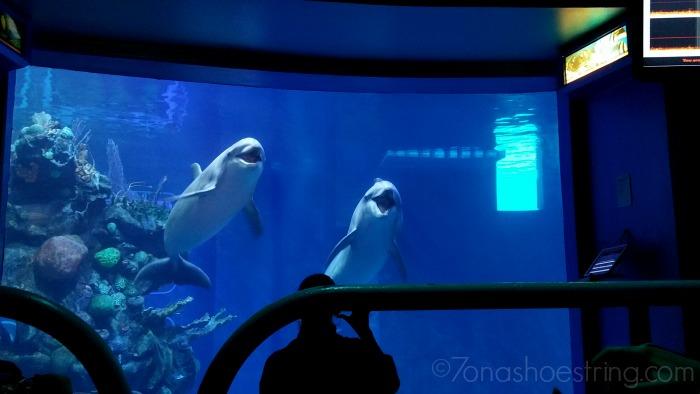 underwater restaurant disney world. Contemporary Disney Underwater Restaurant Disney World Fish Tank On