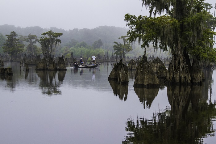 Kayak Through the Dead Lakes in Gulf County