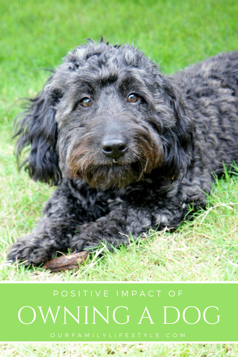 Positive Impact Owning a Dog Can Have on Your Life