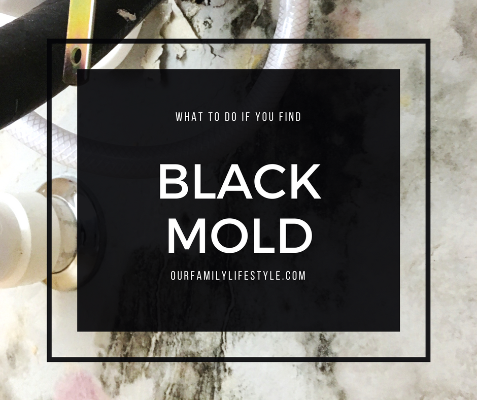 what to do if you find black mold