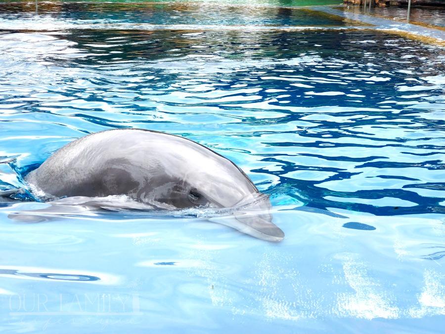 Dolphin Lagoon at SeaWorld San Antonio