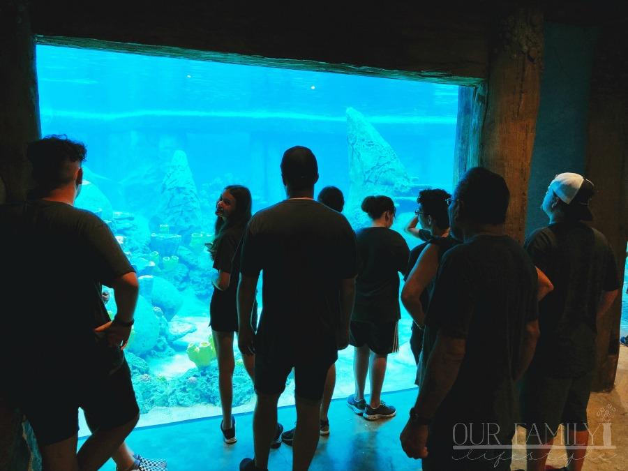 underwater dolphin viewing at SeaWorld San Antonio