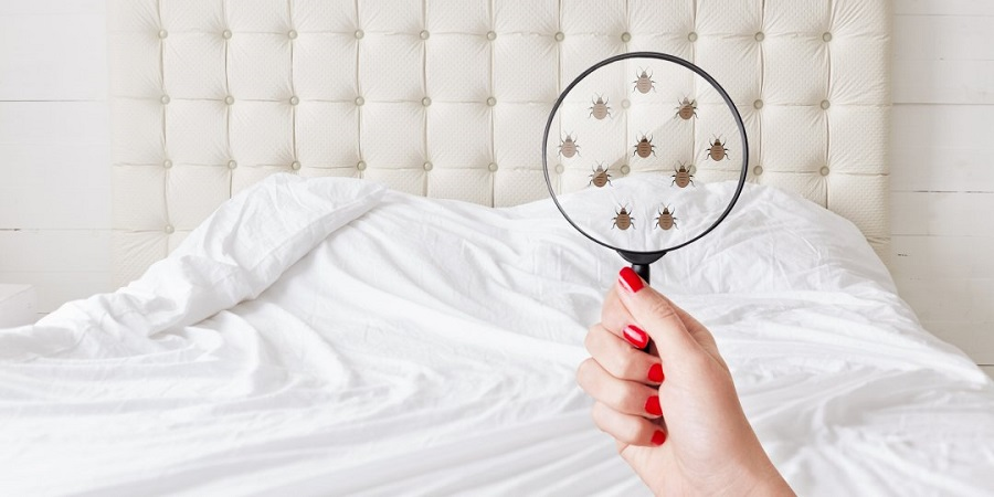 search for bed bugs