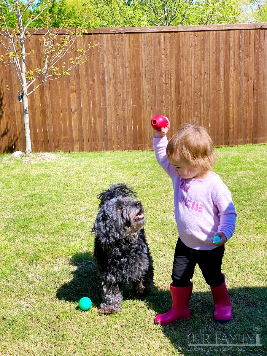 Riley playing fetch with Cole