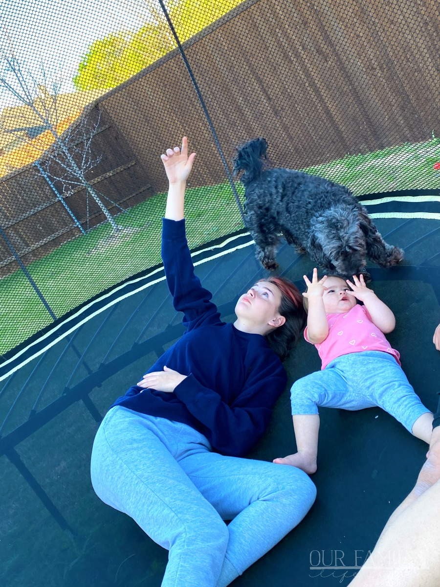 kids and pups on trampoline
