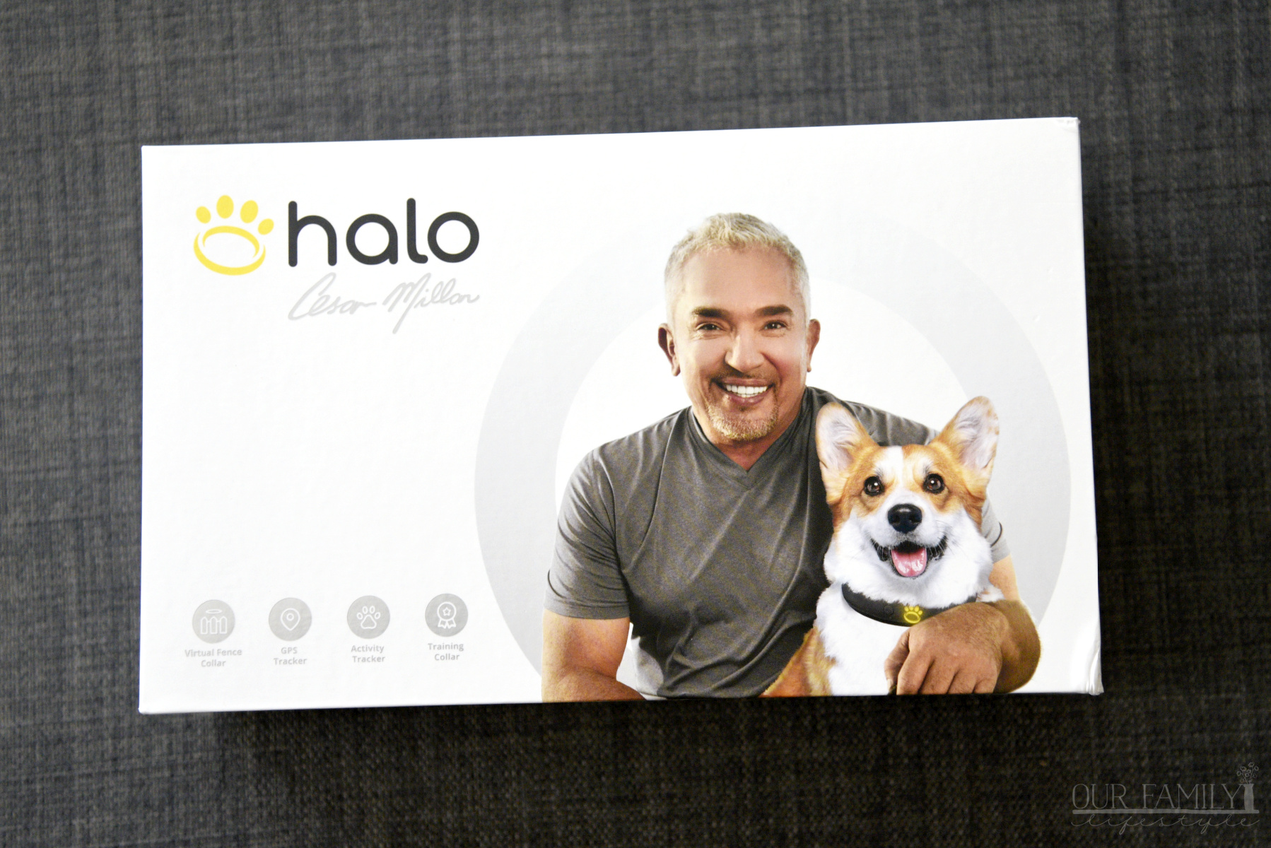 Keep Your Dog Safe with The Halo Collar